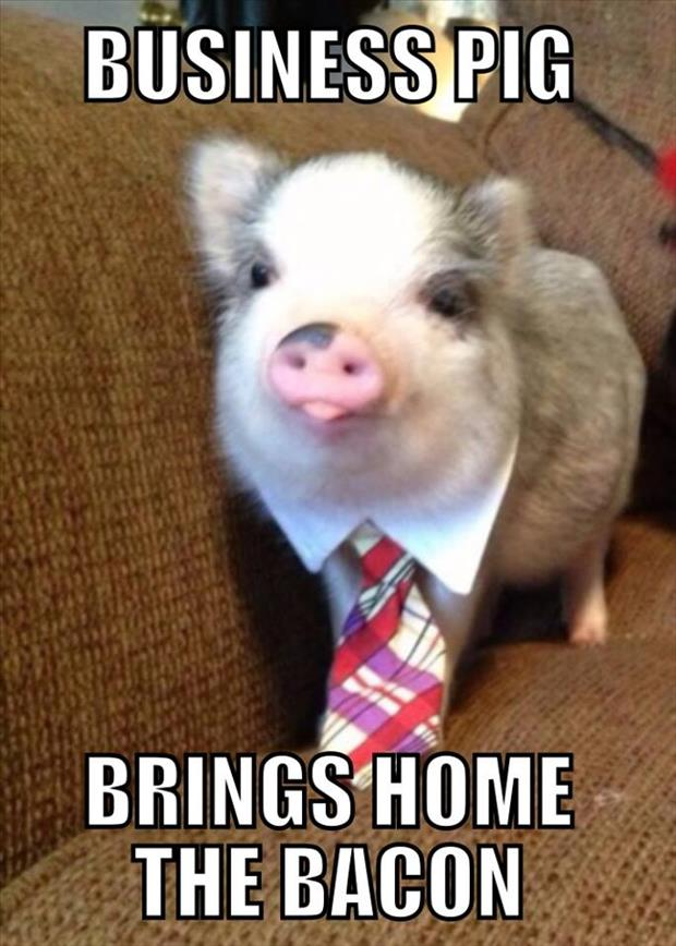 funny pig brings home the bacon