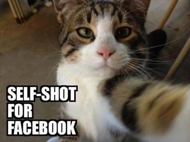 if cats took selfies (14)