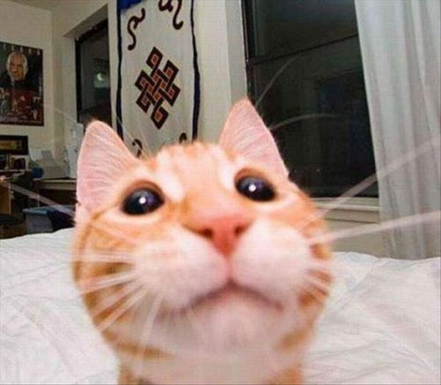 if cats took selfies (22)