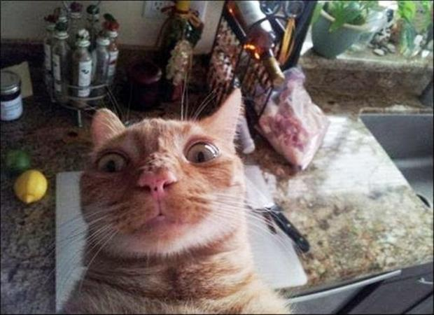if cats took selfies (26)