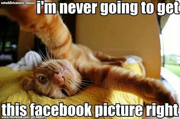 if cats took selfies (4)