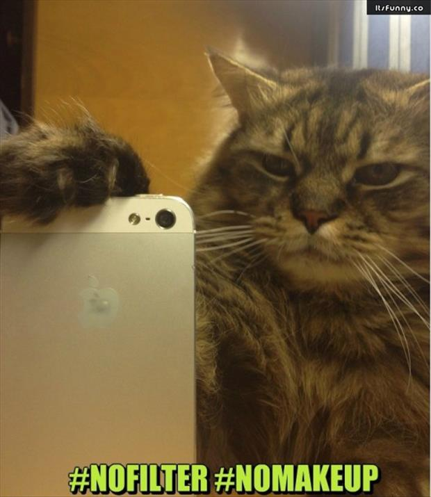 if cats took selfies (7)