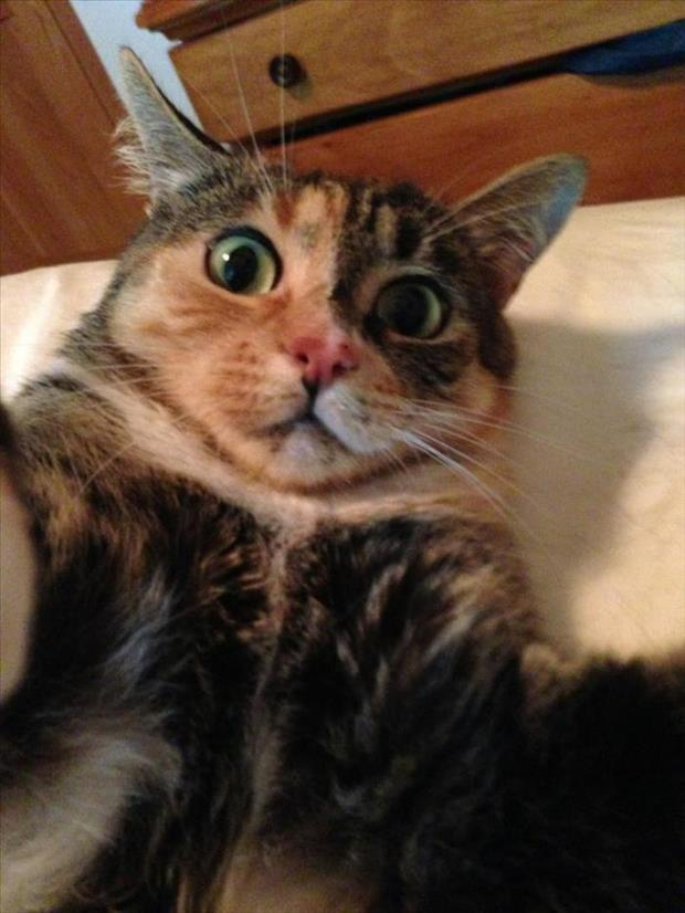 if cats took selfies (8)