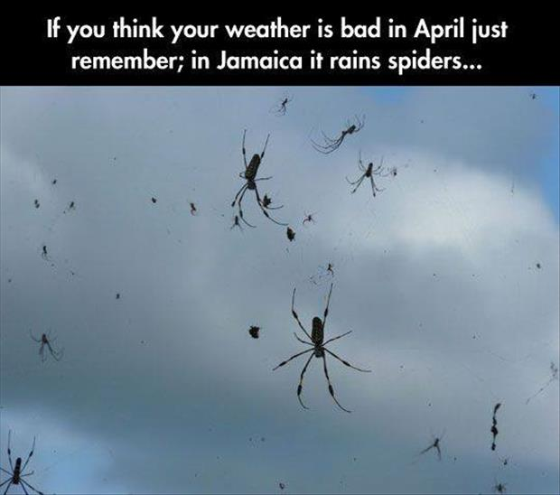 it rains spiders