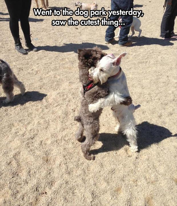 meanwhile at the dog park