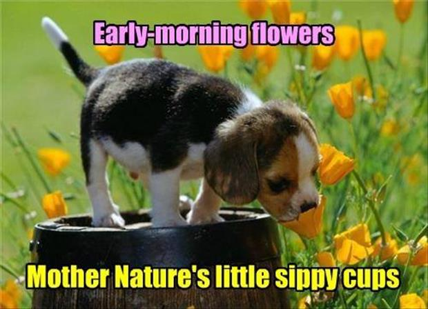 mother natures sippy cups