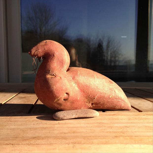 seal sweet potato
