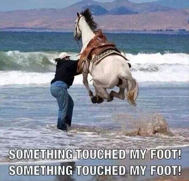 something touched my foot in the water