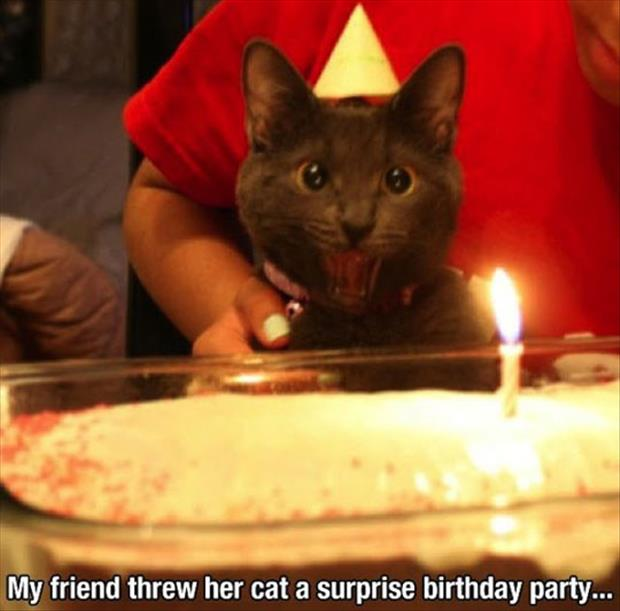 suprise birthday party for cat