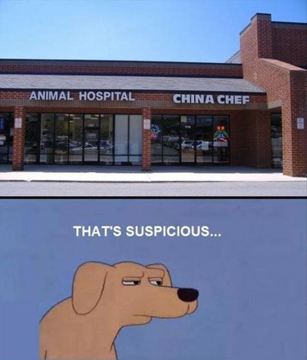 suspicious animal shelter