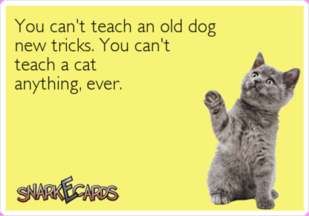 teaching a cat anything ever
