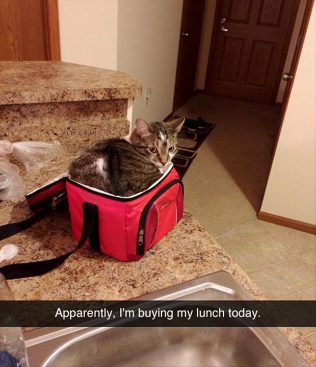 the cat is sitting on my lunch