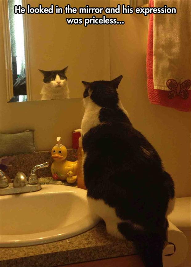 the cat looks in the mirror