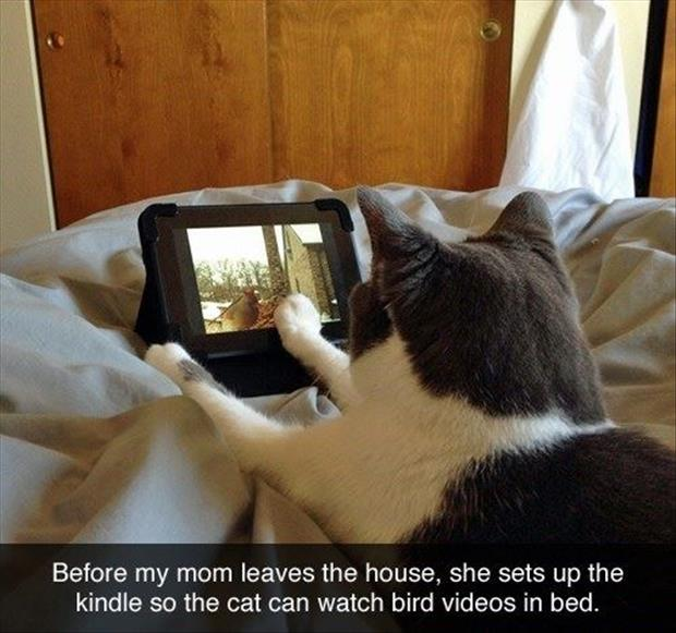 the cat watches bird videos in bed