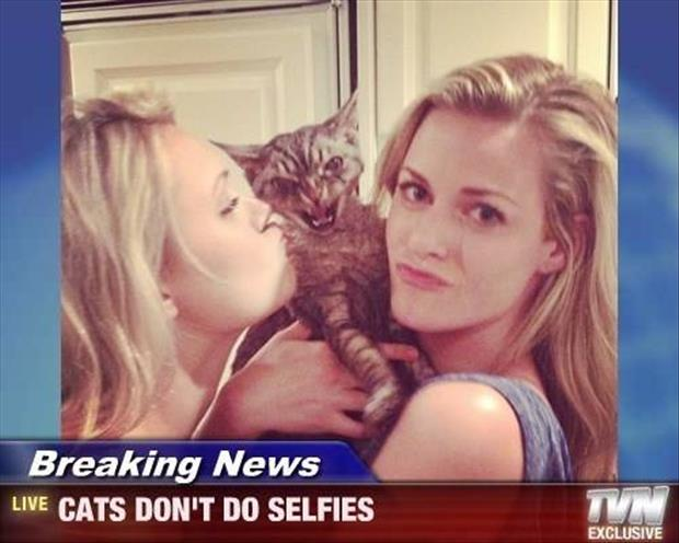 the cats don't like selfies