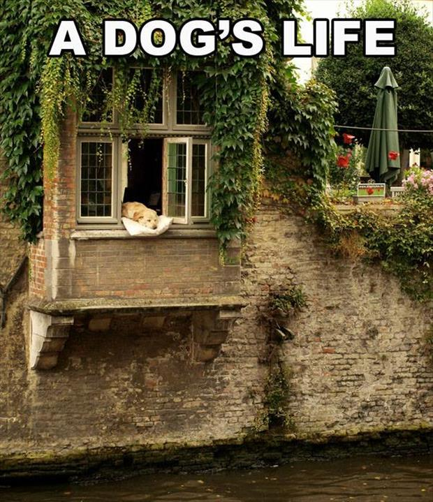 the dog's life