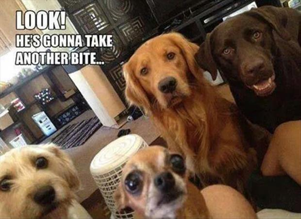 the dogs watching you eat