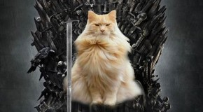 Game Of Throne Characters (Cat Version) – 20 Pics