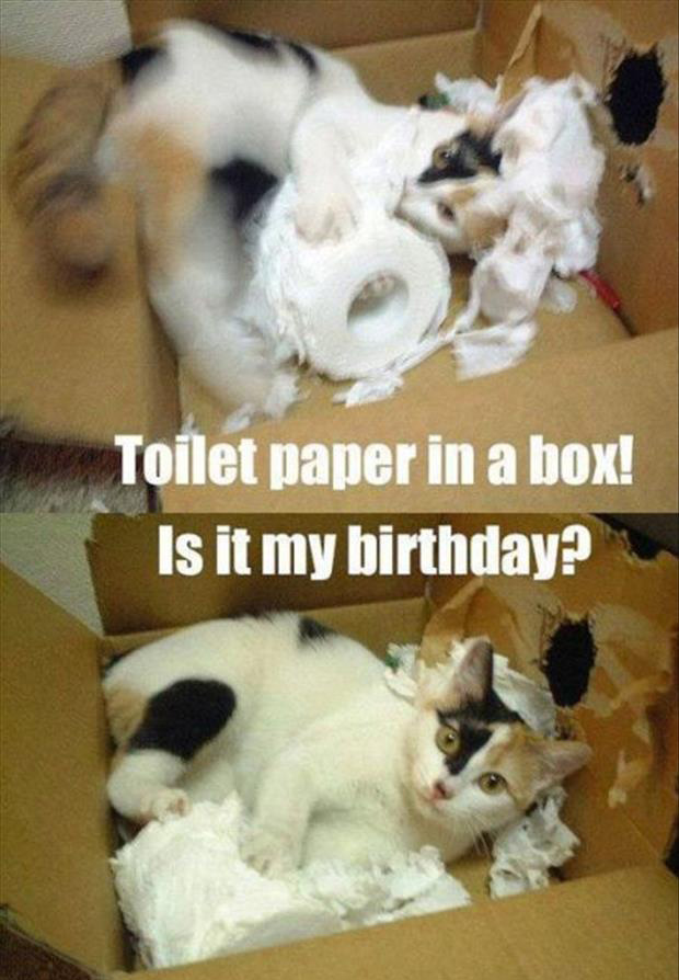 a cats love boxes (13)