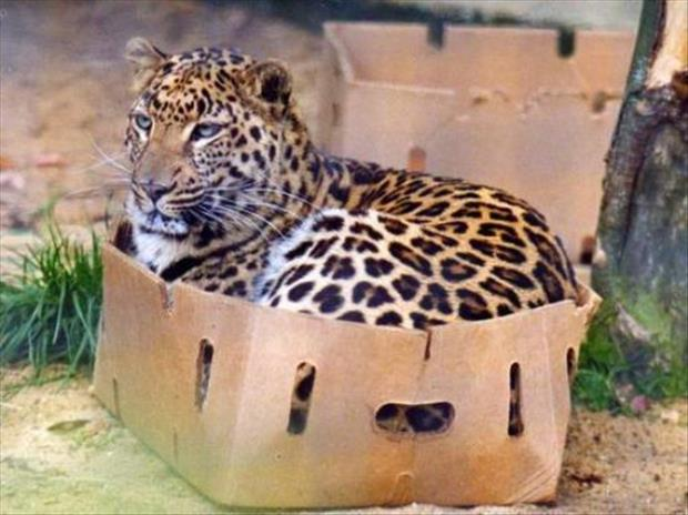 a cats love boxes (19)