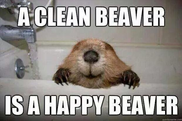 a clean beaver is a happy beaver