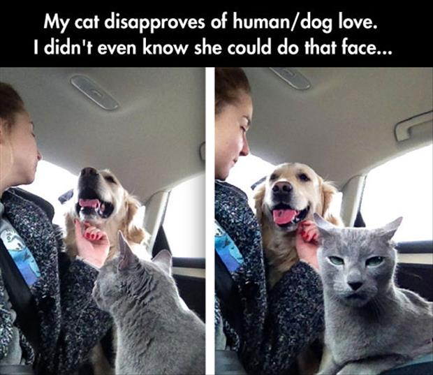 cat does not like human dog love