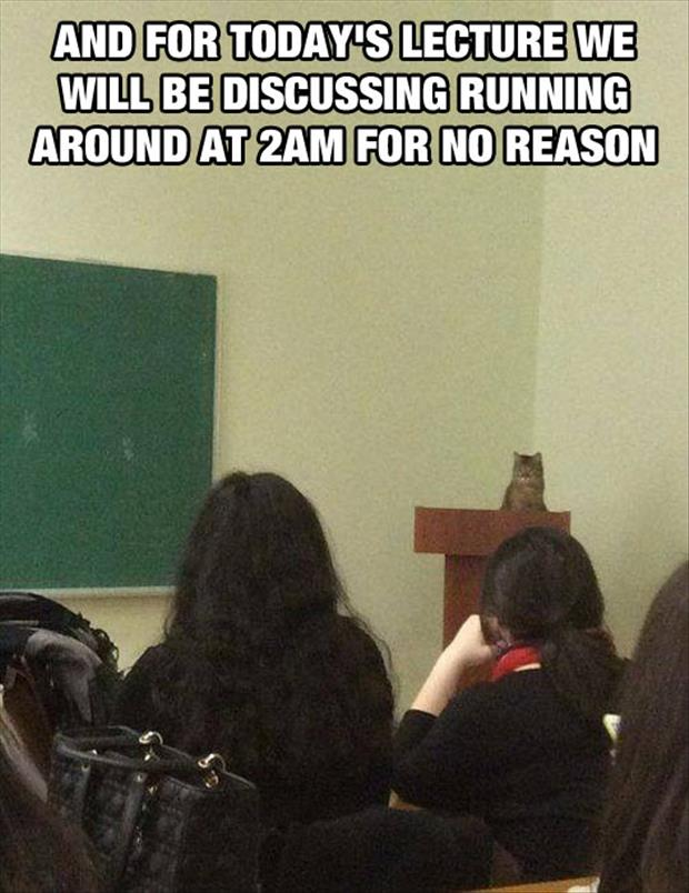 cat gives lecture