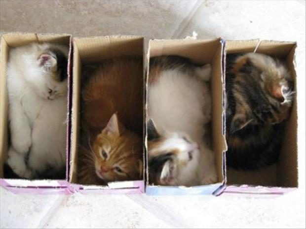 cats love boxes (1)
