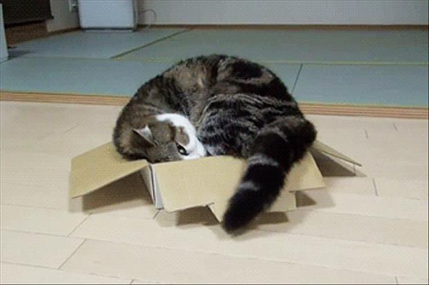 cats love boxes (14)