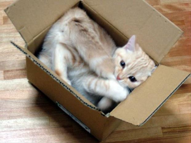 Make Cat Bed Out Cardboard Box