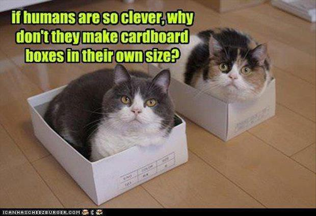 cats love boxes (17)