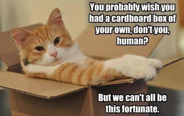 cats love boxes (2)