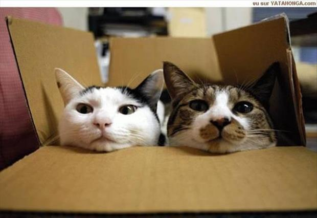 cats love boxes (23)