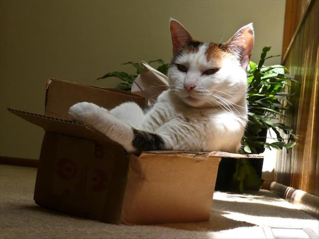 cats love boxes (24)