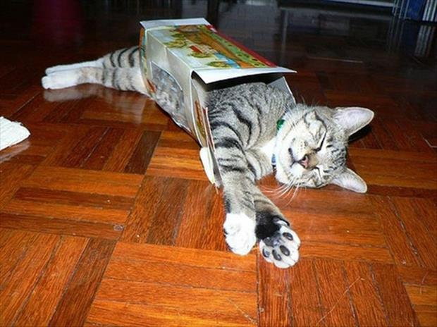 cats love boxes (25)