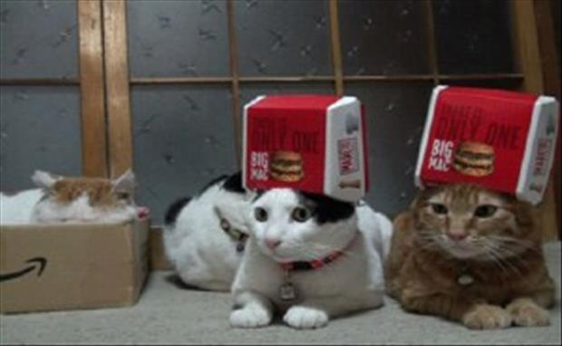cats love boxes (3)