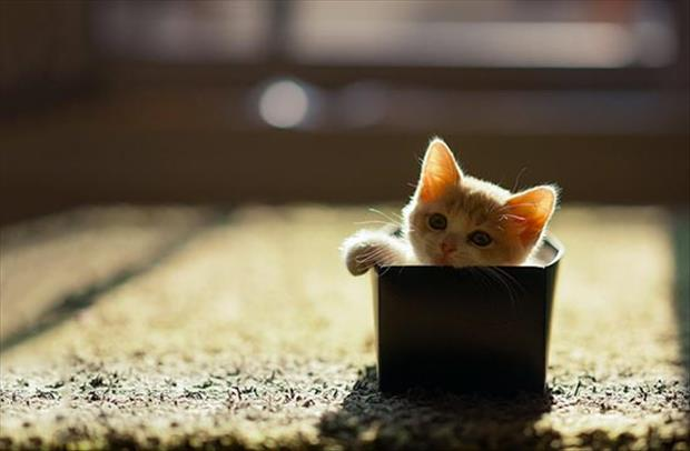 cats love boxes (5)