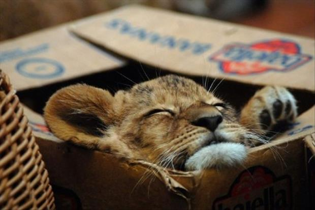 cats love boxes (7)
