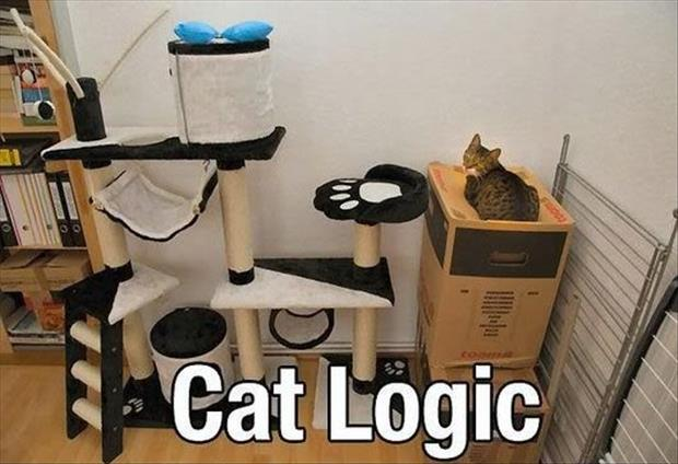 cats love boxes (8)