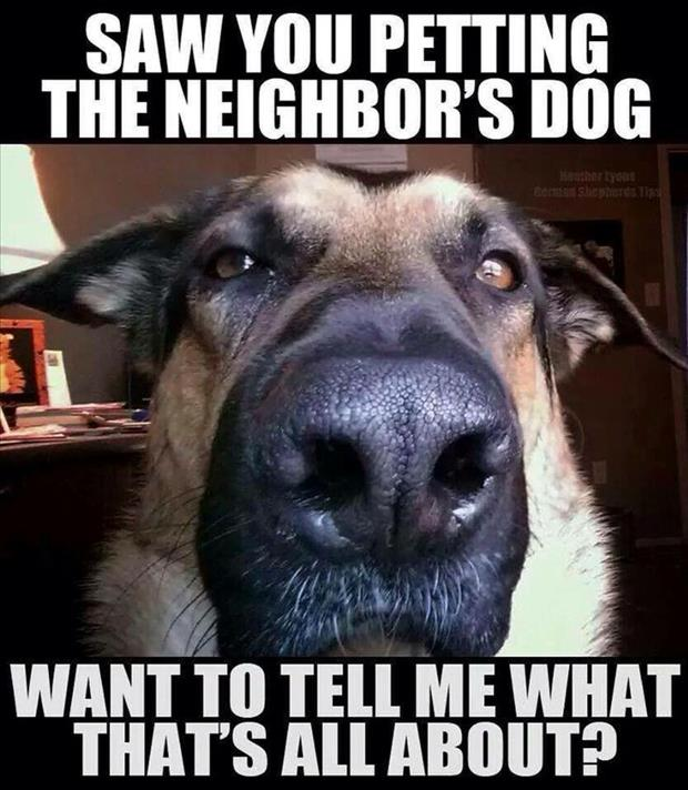dog catches you petting the neighbors dog