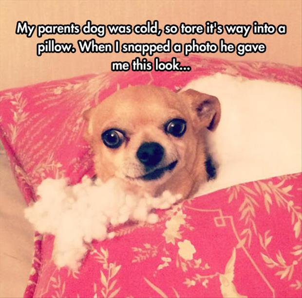 dog in pillow