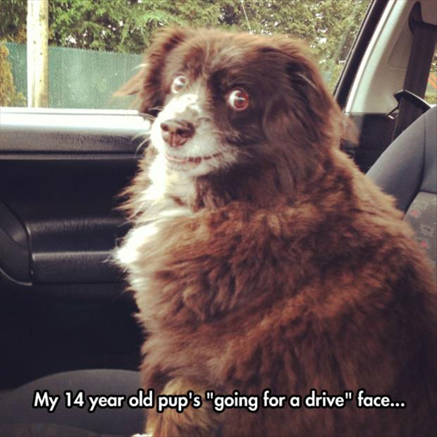 dog loves going for a drive