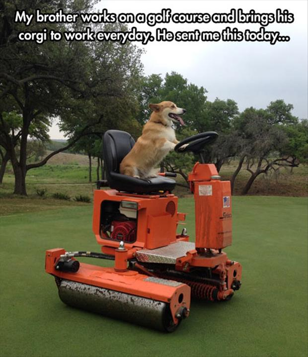 dog on golf course