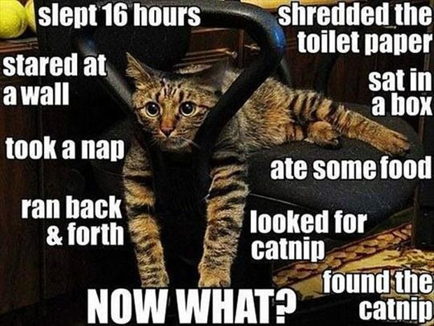 funny animal pictures (14)