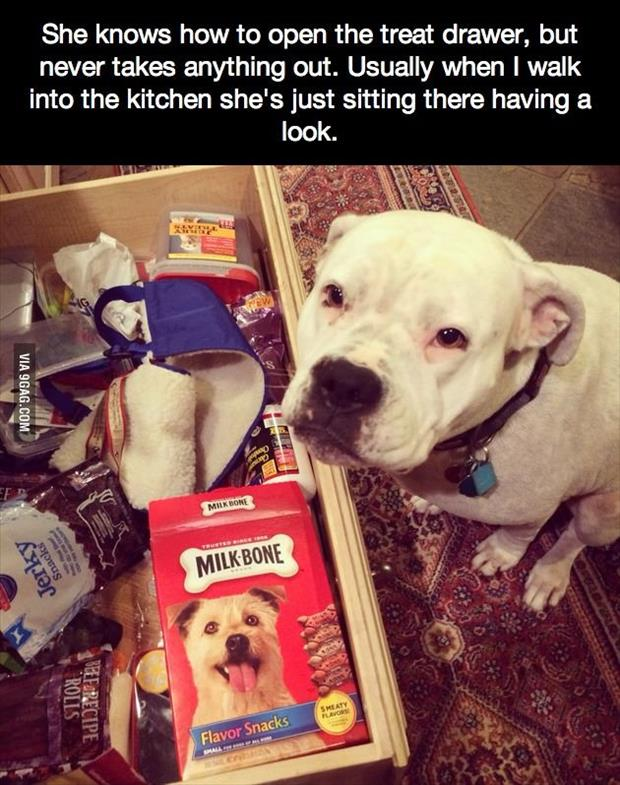 funny animal pictures (17)