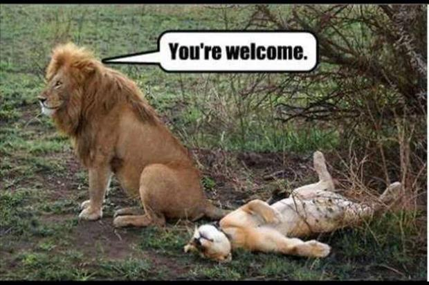 funny animal pictures (20)