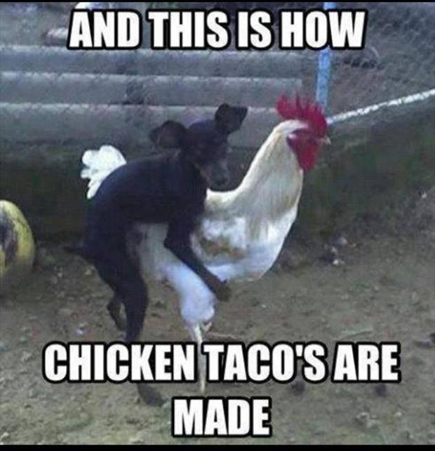 funny animal pictures (2)
