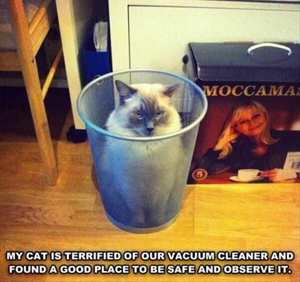 funny animal pictures (23)