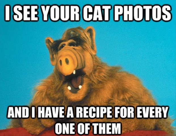 funny cat recipes