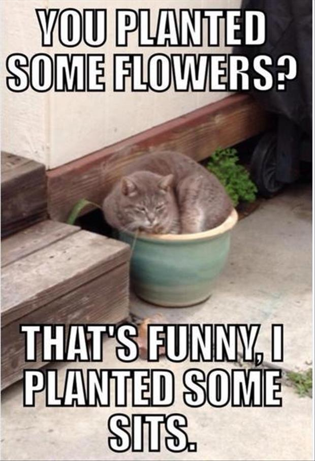 funny cats (11)